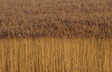 Compositie in riet.